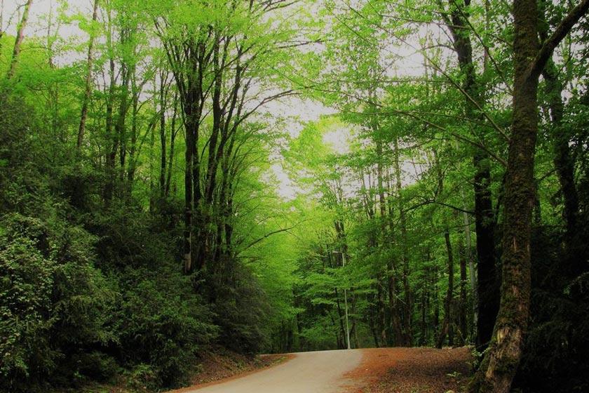 جنگل بابلکنار
